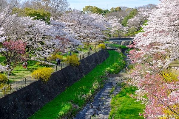 公園内を流れる残堀川沿いでも桜を楽しめる