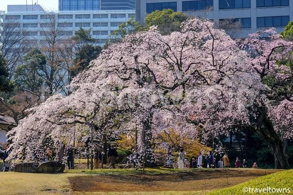 春は来園者の多い人気のシーズン