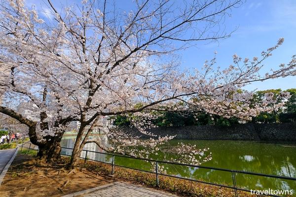 春には近くの桜も見所