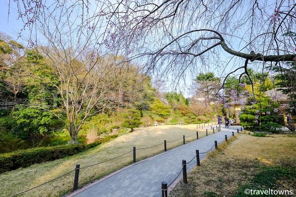 日本庭園では枝垂れ桜が見られる