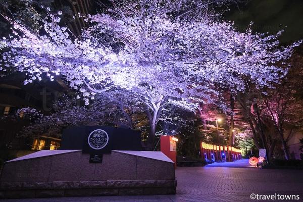 御殿山さくらまつり2019の桜ライトアップ
