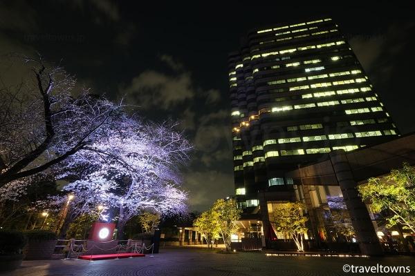 ライトアップされた桜と東京マリオットホテル