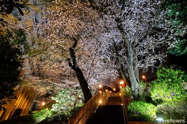 階段沿いの桜もライトアップされる
