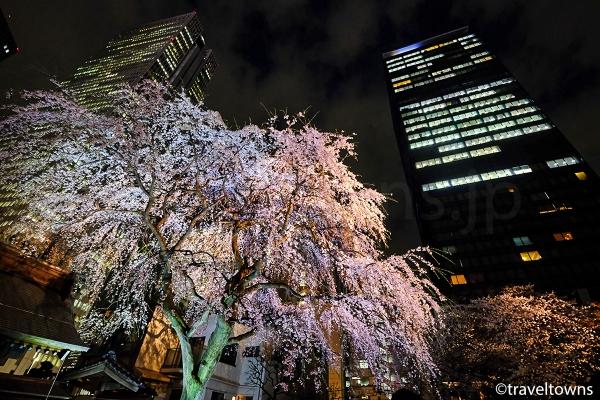 高層ビルが立ち並ぶエリアでライトアップされる桜