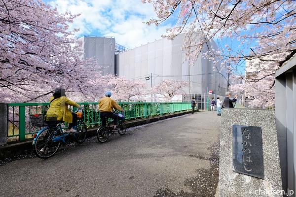中之橋の桜