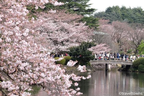 春には約65種類、約1000本の桜が楽しめる