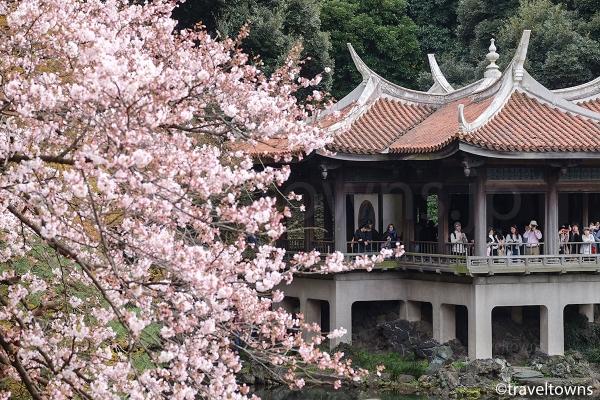 歴史的建造物の旧御涼亭と桜