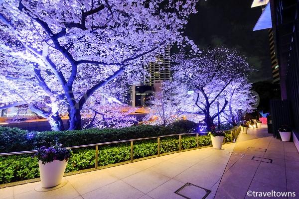 テラスの小道を歩きながら夜桜を楽しめる