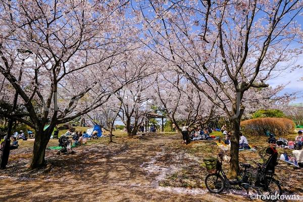 春にはお花見でも人気の葛西臨海公園