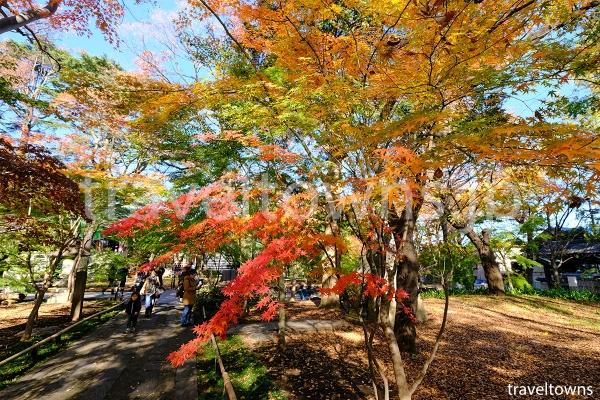 秋には境内の紅葉も楽しめる