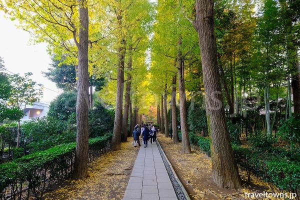 入り口から庭園まで続くイチョウの並木道