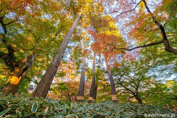 東京23区でまるで山の中にいるような紅葉を楽しめる