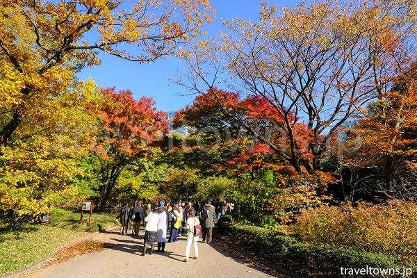 皇居東御苑の二の丸雑木林では紅葉も楽しめる
