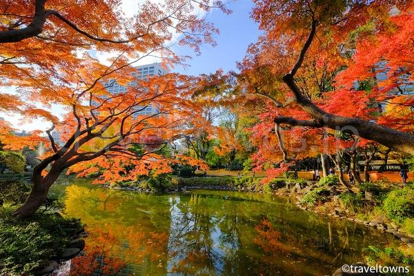 11月下旬~12月上旬に見頃を迎える雲形池の紅葉