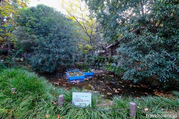 池袋の森にあるトンボ池