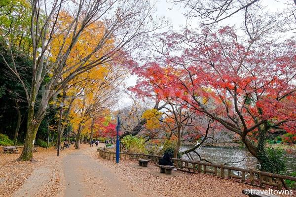 井の頭池周辺の遊歩道を散策しながら紅葉狩りができる