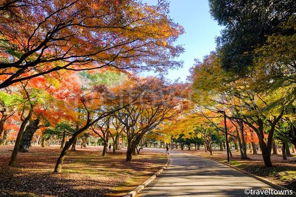 11月下旬から12月上旬にかけては園内の各所で紅葉が楽しめる