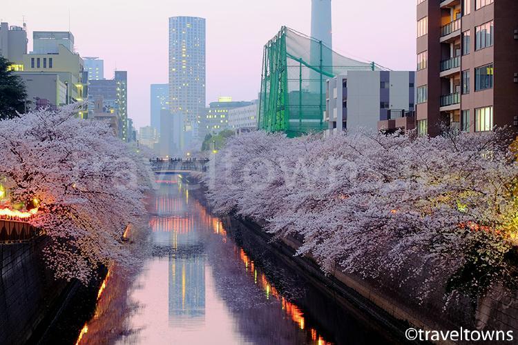 目黒川の桜並木(目黒)