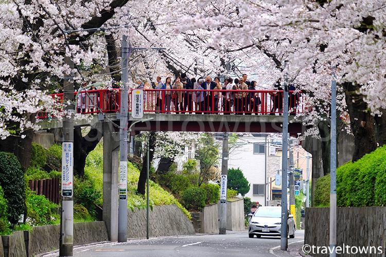 さくら坂・さくら橋(田園調布本町)