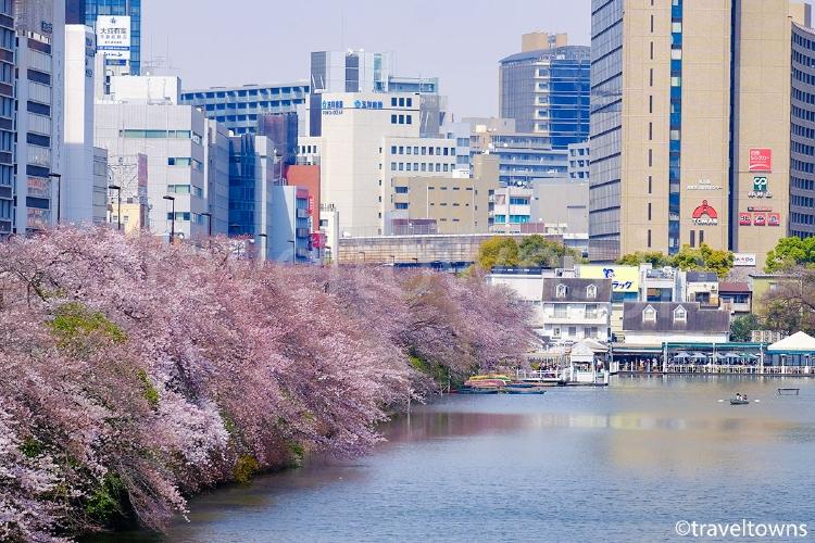 外濠沿いの桜(市ケ谷~飯田橋)